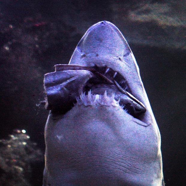 Researchers are calling for sharks to be better protected