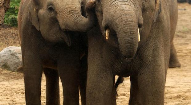 Thailand has vowed to put an end to the ivory trade