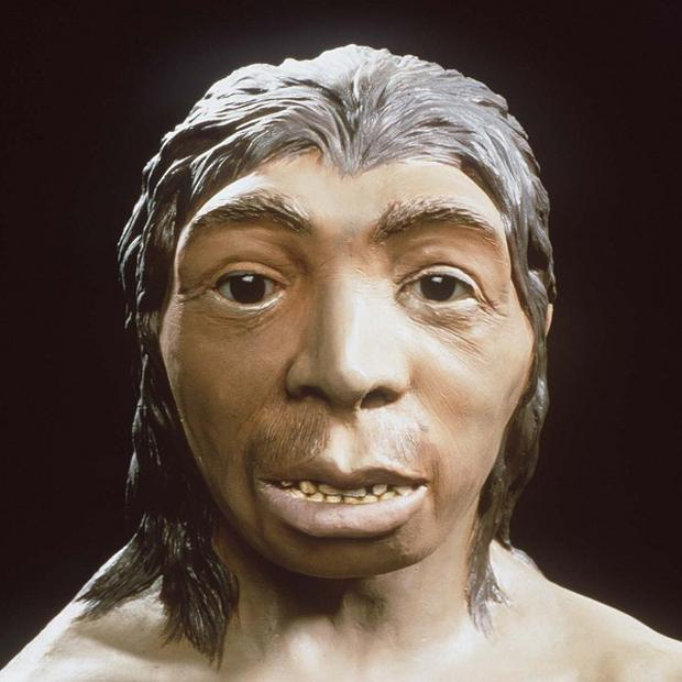 A team at the Max Planck Institute for Evolutionary Anthropology in Leipzig, Germany, completed the sequencing of a Neanderthal genome