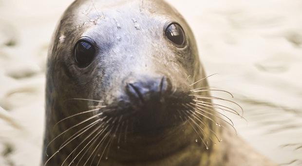 Cameras set up to monitor the beach colony recorded people punching and sitting on seals
