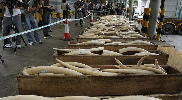 Cameramen film illegal ivory seized in Hong Kong (AP)
