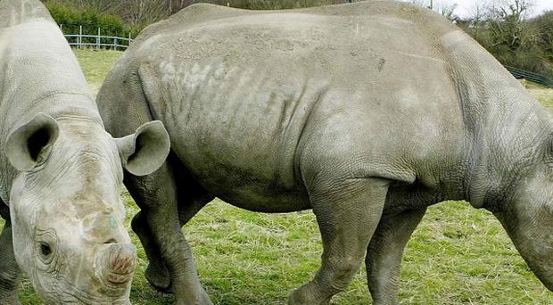 A man has been arrested over the sale of black rhino horns
