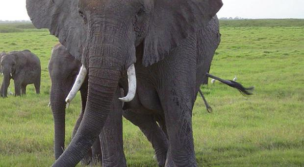 Ninety-one elephants have been found poisoned by poachers in Zimbabwe.