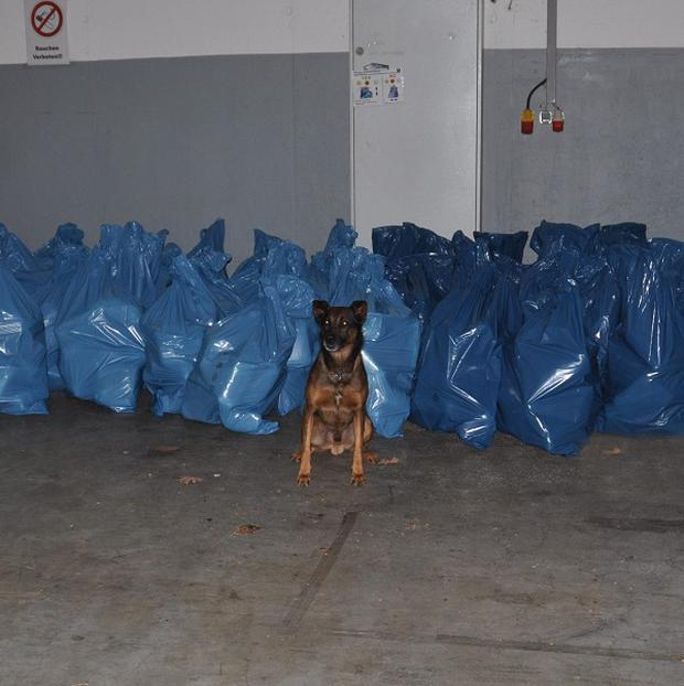 Sniffer dog Kimbo sits in front of 500 kilograms of cannabis seized from a van entering southern Austria from Slovenia (AP)