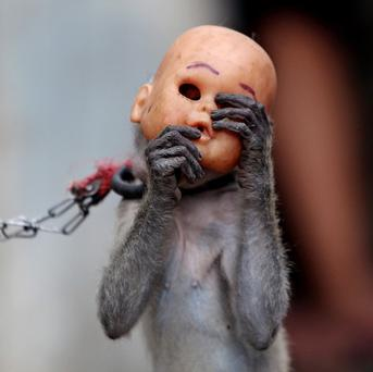 A street monkey wears a baby doll mask as it performs in a slum in Jakarta.