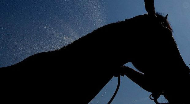 The slaughter of horses in the US, for human consumption in other countries, could resume within days.