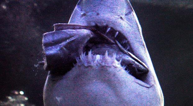 A surfer has been killed by a shark off Gracetown on Australia's west coast