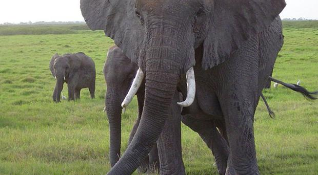 Key African countries have agreed a joint plan to stop illegal ivory trade