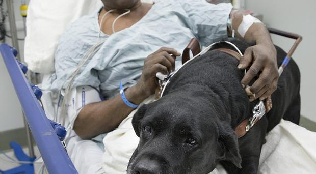 Cecil Williams recovering in hospital with hero guide dog Orlando (AP)