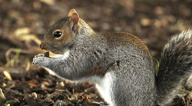 A man has been stabbed with a ceramic squirrel