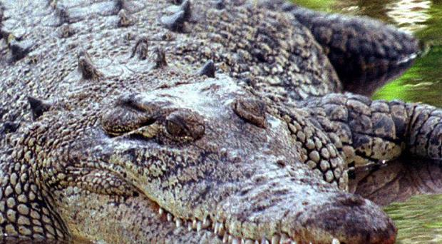 Police in Australia have found evidence indicating that a boy snatched by a crocodile was killed in the attack