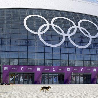 A stray dog walks outside the Ice Dome venue as preparations take place for the 2014 Winter Olympics (AP Photo/Patrick Semansky)