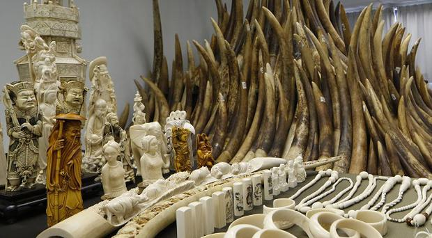 Confiscated ivory is displayed in Hong Kong (AP)