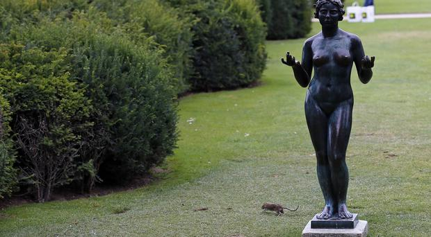A rat runs next to a statue in the gardens of the Louvre Museum in Paris (AP)