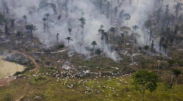 The rate of deforestation in the Amazon rainforest has fallen, a Brazilian minister said