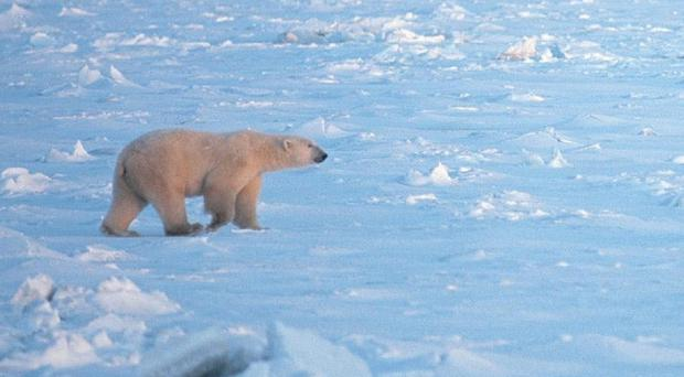 A polar bear dragged a tourist out of his tent as he slept on a remote Arctic island