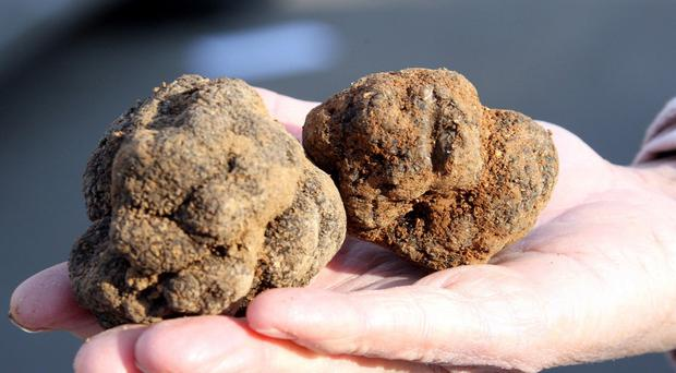 Grignan is near one of France's largest truffle markets (AP)