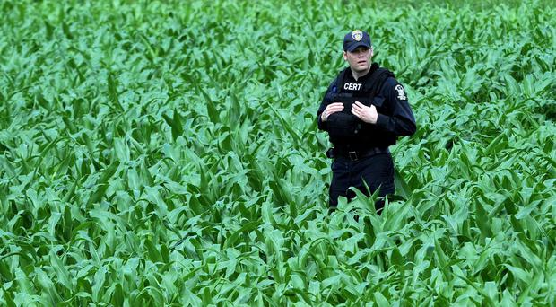 A New York State Department of Corrections officer pauses while searching a cornfield after a possible sighting of the two murder convicts who escaped from a prison two weeks ago (AP)