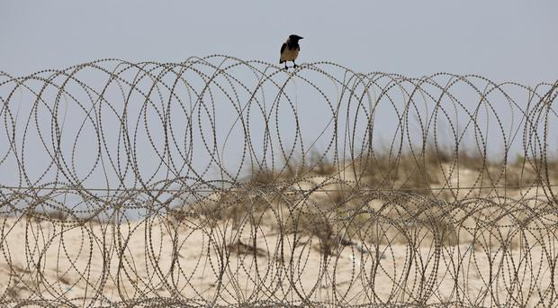 A crow sits on a fence on the sea front of the Israel-Gaza border, near where Israeli Avraham Mangisto