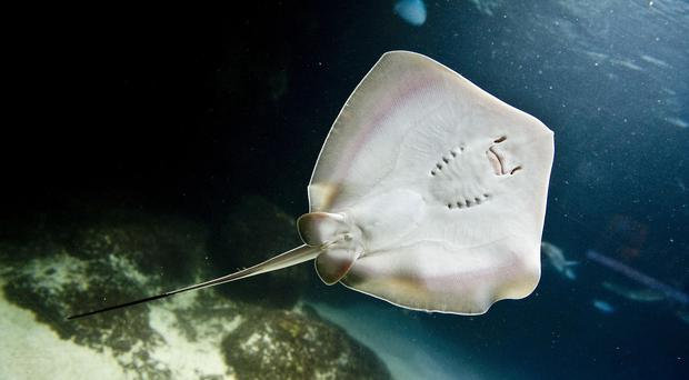 The stingrays were in a shallow pool that allows visitors to touch and feed them