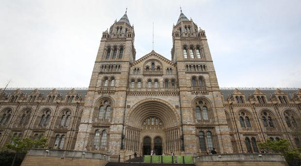 The Natural History Museum said it has 20,000 human remains in its collection