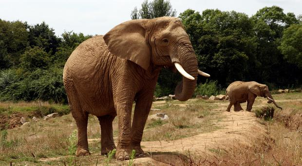 China is taking steps to fight trafficking amid criticism that demand for ivory among its rising middle class threatens African elephants