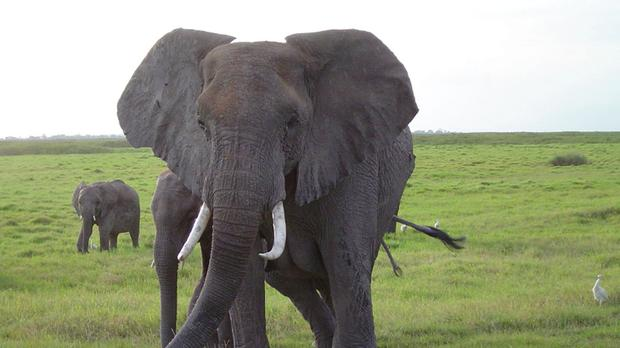 More elephants have been killed by poachers using cyanide in Zimbabwe