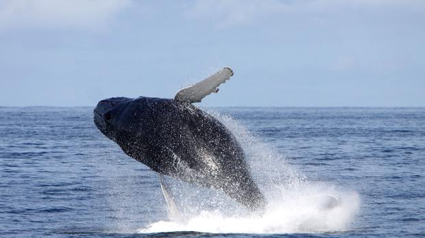 A whale watching boat with 27 aboard has sunk off Vancouver Island