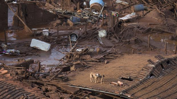 Two dogs stand on the roof of a destroyed house at the small town of Bento Rodrigues after a dam burst in Minas Gerais state (AP)