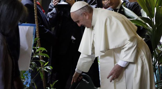 Pope Francis waters a tree he planted as he arrived at the UN office in Nairobi (AP)