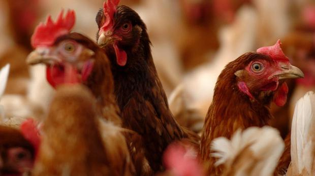 Six human cases of H5N6 have been reported in China