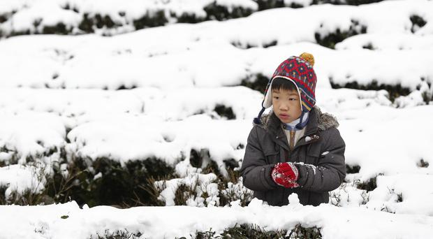 A young boy enjoys the snowfall on a tea plantation in the Pinglin mountain area of New Taipei City, Taiwan during an unusually cold weather front (AP)