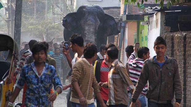 A wild elephant that strayed into the town moves through the streets as people follow at Siliguri, India (AP)