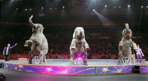 Elephants perform for the final time in the Ringling Bros and Barnum and Bailey Circus (AP)