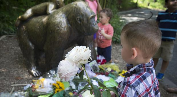 A boy brings flowers to put beside a statue of a gorilla outside the Gorilla World exhibit at Cincinnati Zoo (AP)