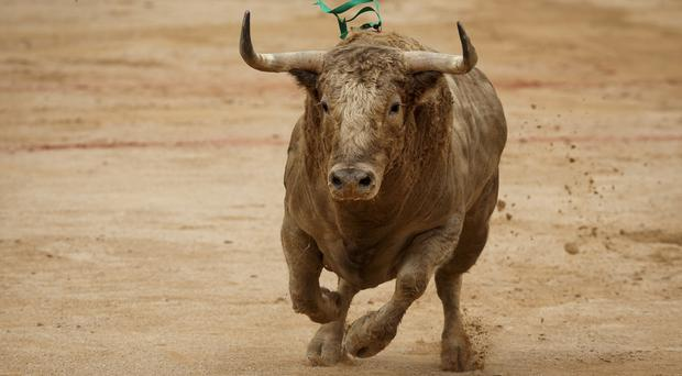 Bull runs are a tradition in some parts of Spain