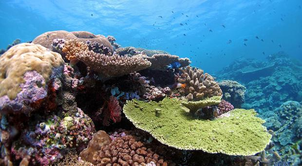 The ship went off course and grounded among the World Heritage-listed coral reefs in 2010 (Australian Institute of Marine Science/PA)