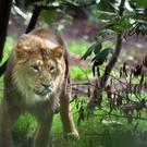 Two lions have escaped at a zoo in Germany