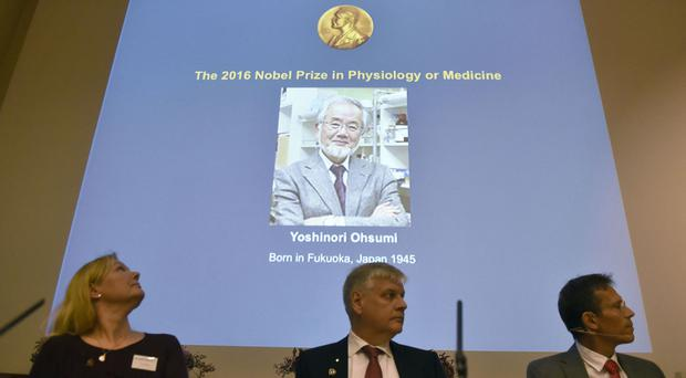 A photo of Yoshinori Ohsumi is displayed on a screen at the Nobel Forum in Stockholm, Sweden, as he is announced as the winner of the Nobel Prize for medicine (AP)
