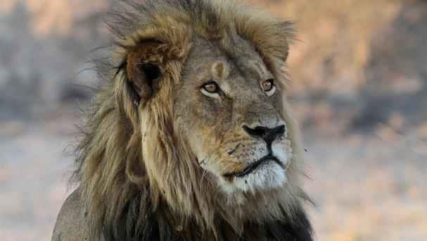 Cecil the lion was killed in 2015. (AP)