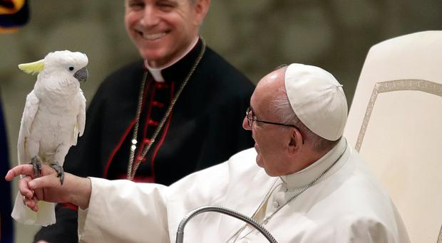 Pope Francis holds a parrot during a performance of the Golden Circus in theVatican