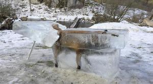 A block of ice containing a drowned fox who broke through the thin ice of the Danube river in Fridingen, southern Germany(Johannes Stehle/dpa via AP)