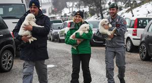 Police officers carry to safety three puppies found in the rubble of the avalanche-hit Hotel Rigopiano (ANSA/AP)