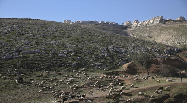Sheep graze near the Israeli settlement of Maale Adumim, near Jerusalem (Oded Balilty/AP)