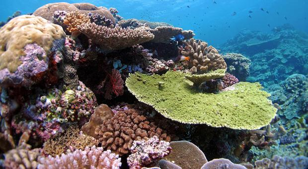 Located in the Pacific Ocean is the 'ring of fire', a region consisting of hundreds of active volcanoes. Also in this ocean is the Great Barrier Reef off the coast of Australia