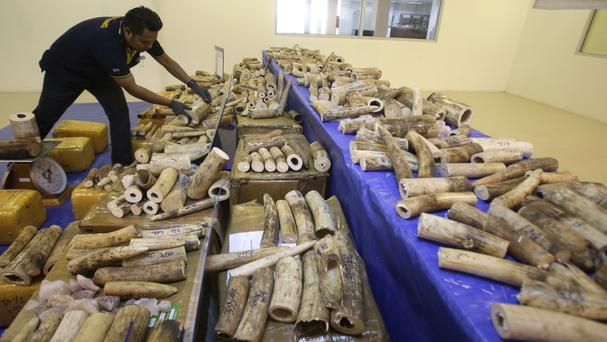 Thai customs officials display seized ivory during a press conference at Customs Suvarnabhumi airport in Bangkok (AP)