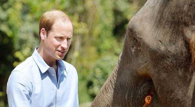 The Duke of Cambridge has said China's decision to shut down its ivory trade by the end of the year could be a 'turning point' in the battle to save elephants from extinction