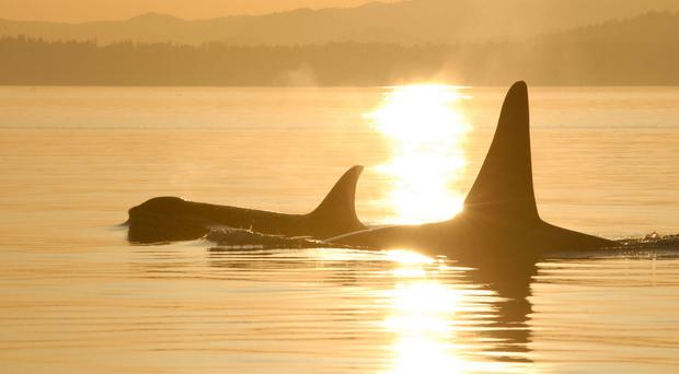 SeaWorld announced the end of its orca breeding programme in 2016