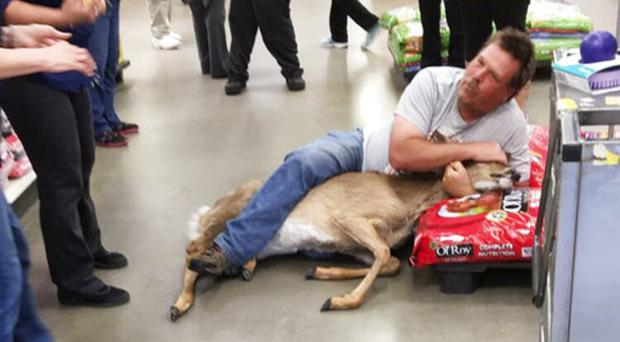 Tom Grasswick holding on to a confused white-tailed deer that wandered into the shop (Stephanie L Koljonen via AP)