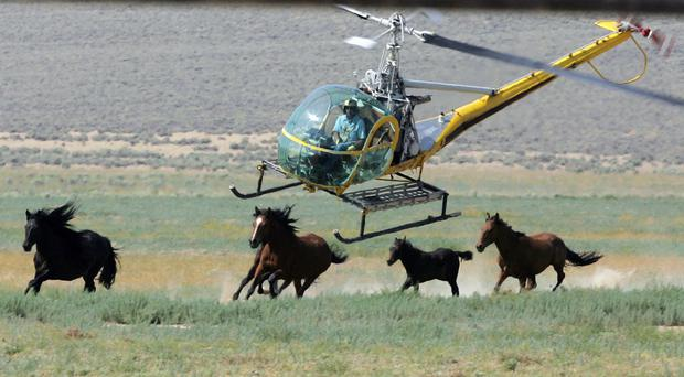 Wild horse advocates say President Trump's new budget proposal would undermine protection of an icon of the American West (AP)